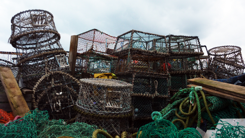 Tuesday November 18th (2014) a load of nets and that