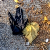 glove and leaf