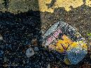 squashed litter 03