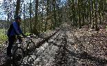 19th: up through the woods