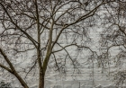 13th: london plane and wrapped building